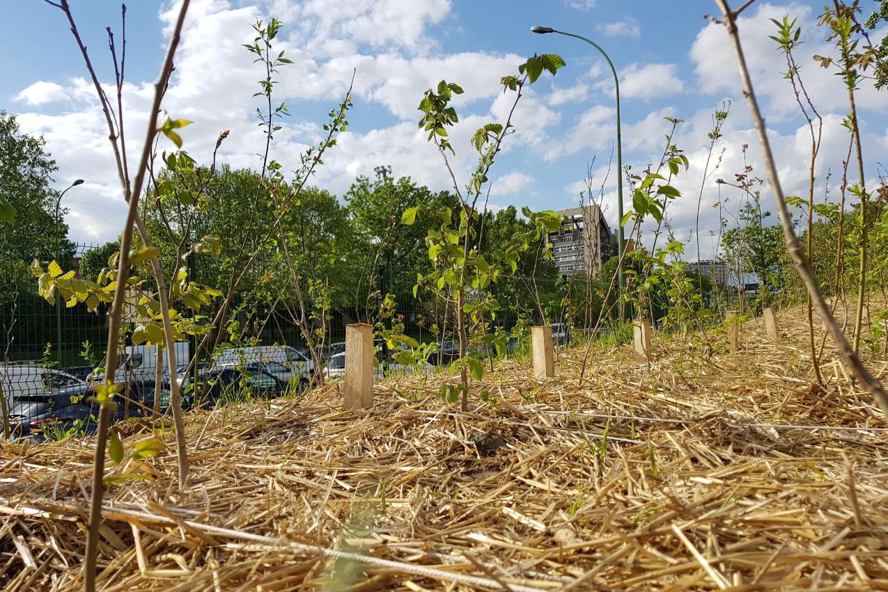 """Résultat de recherche d'images pour """"boomforest restore the native forest"""""""